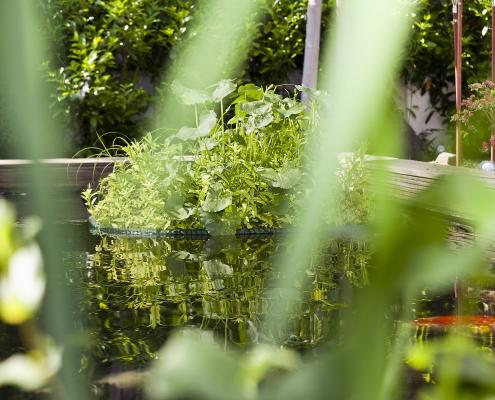 Pflanzeninsel auf Teich